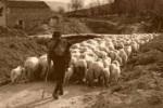 Il Management e lo sheepdog: la sola tecnica non basta
